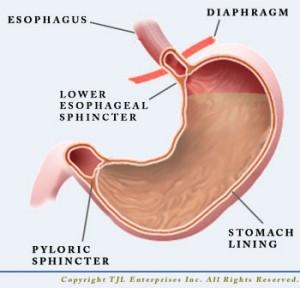 Stomach-Plain